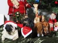 Hundarnas högtidsbilder