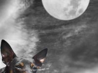 Hundarnas modellbilder
